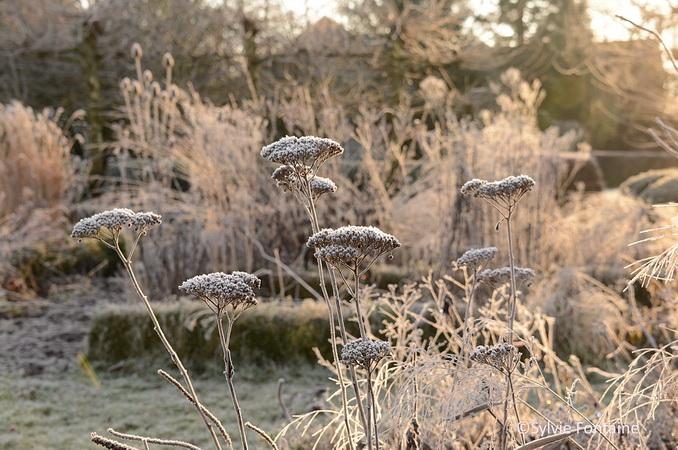 Le jardin en hiver trange myst rieux et beau la fois for Beau jardin en hiver