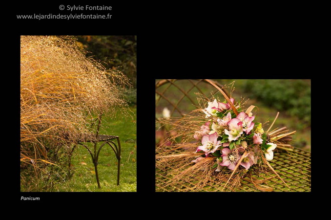 Actualit jardin for Au jardin de sylvie