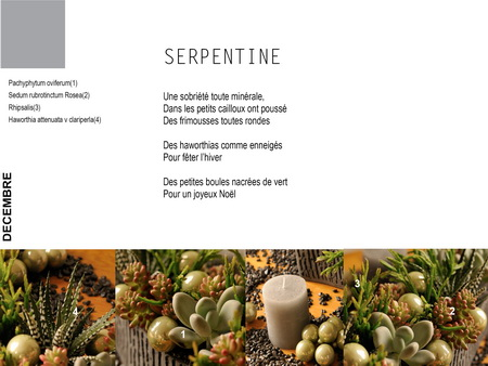 composition-de-succulentes
